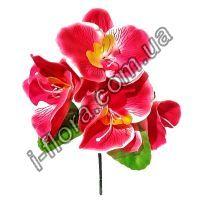 Букет орхидеи бордюр    100шт