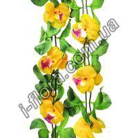 Лиана орхидея   10шт