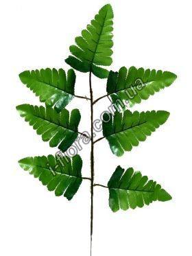 Лист папоротника зеленый   20шт